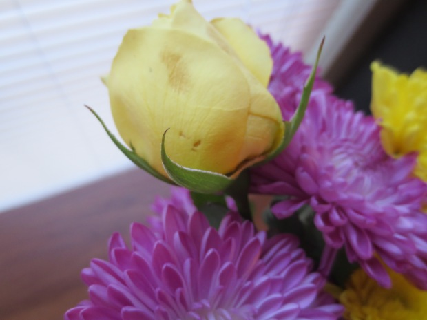 I loved this little yellow rose from a bouquet that a dear friend brought us. I saved it and think of it as my Taylor flower.